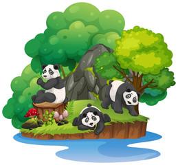 Isolated nature island with panda