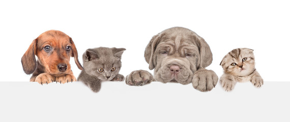 Group of cats and dogs above empty white banner. isolated on white background. Empty space for text