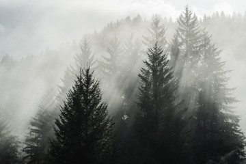 Fog Filtering Through Trees