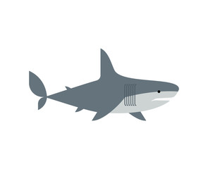 Shark isolated. Marine predator vector illustration. Large predatory sea fish.