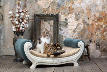 Two nice cats in interior