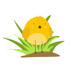 Cute cartoon yellow chicken in grass illustration. Childish orange vector bird for kids print design, spring Easter decoration, label