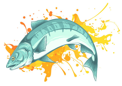 Salmon fish jumping vector illustration