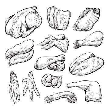 Raw chicken meat sketch, uncooked hen ingredients set