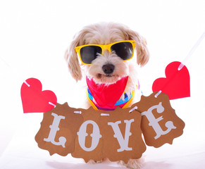 love dog with sunglasses