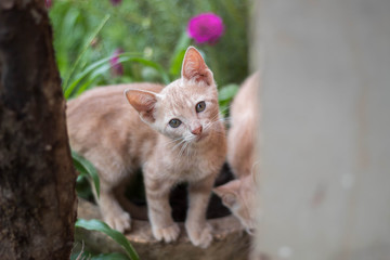 Gato filhote amarelo