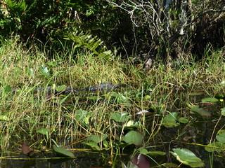 Foto auf Leinwand Chamaleon Landschaft Tiere