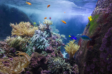 Sea fishes and corals underwater, Dubai aquarium, UAE