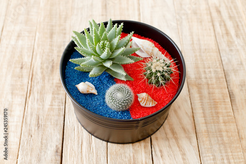 Small garden with cactuses, miniature succulent plant and