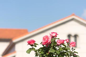 空とバラと建物