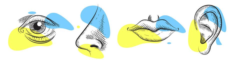 Nose, eye, lips, ear in pencil art style. Vector illustration design.