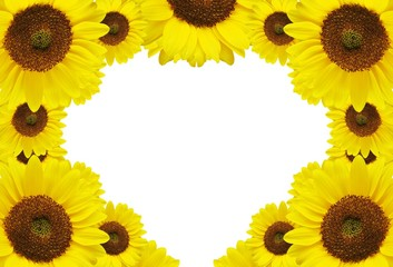 Sunflower illustrations with white background for wedding cards and Valentine