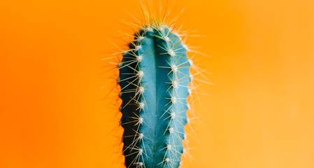 Green cactus closeup over bright orange pastel background. Colorful yellow summer trendy creative concept.