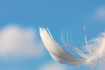 snow-white feather on blue sky background with clouds, lightness concept