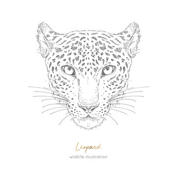 Symmetrical Vector portrait illustration of leopard. Hand drawn ink realistic sketching isolated on white. Perfect for logo branding t-shirt coloring book design.