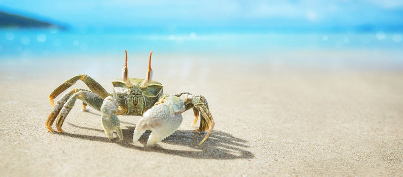 Seychelles Crab on the Ocean Coast. Tropical Island