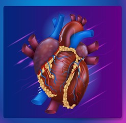 Realistic Vector Illustration Human Healthy Heart