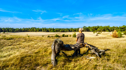 Senior woman sitting on a dead tree in the mini desert Beekhuizerzand in the Hoge Veluwe nature reserve under blue sky. In the province of Gelderland, the Netherlands