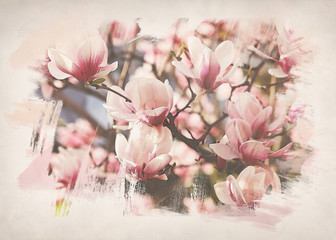 Digital watercolor painting. Maglolia flowers background
