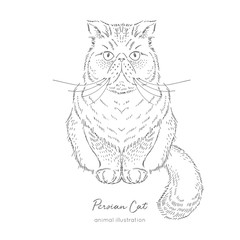 Symmetrical Vector portrait illustration of Persian cat. Hand drawn ink realistic sketching isolated on white. Perfect for logo branding t-shirt coloring book design.