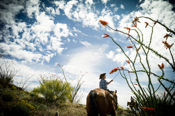 Boy riding horseback through Sonoran Desert in bloom
