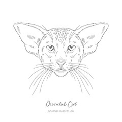 Symmetrical Vector portrait illustration of Oriental cat. Hand drawn ink realistic sketching isolated on white. Perfect for logo branding t-shirt coloring book design.
