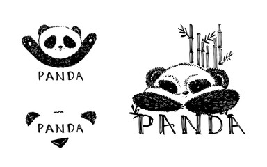 Hand drawn panda with bamboo. Vector illustration isolated on white. Panda Logo Design Inspiration.