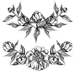 Vector illustration with black peonies and leaves. Linear  graphics, sketch, ink drawing, imitation of engraving.  Hand drawn plants,  line-art. Floral background. Retro, vintage flowers.