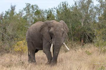 Garden Poster Elephant Elefant 58