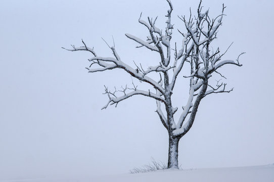 Schneebedeckter Baum auf der Schwäbischen Alb