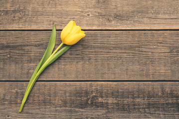 Yellow, single tulip lying on an old, natural boards. Free, copy space for text or description. Wedding or valentine day.