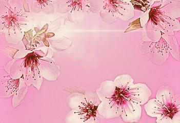 Leinwandbilder - Cherry flower.Pink cherry as background.Spring Cherry blossoms in full bloom.
