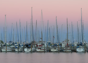 Wall Mural - Sailboats at sunset at the South Yacht Basin of St. Petersburg, Florida
