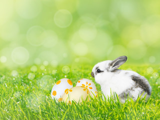 Painted Easter eggs and white rabbit on the green grass lawn spring background