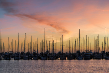 Wall Mural - Sailboats in the South Yacht Basin of St. Petersburg, Florida at sunrise