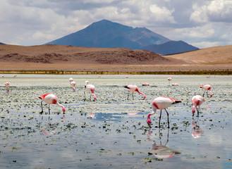 Foto auf AluDibond Flamingo Blue lake with Flamingos eating