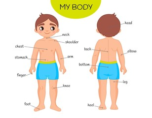Educational material for children My body. Illustration of a cartoon boy.