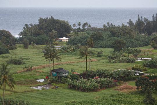 Hana and Taro Plantation Fields in Maui County, Hawaii