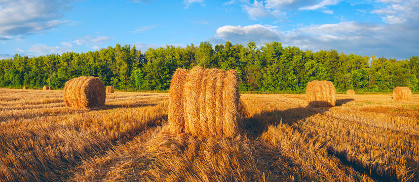 Panorama of golden hay bales on the field after harvesting illuminated by the last rays of setting sun.
