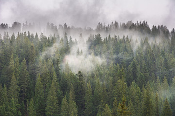 Foto op Canvas Ochtendstond met mist Carpathian spring forest with wrapped fog trees and fires.