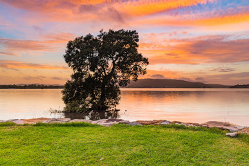 Sunrise Bay Waterscape with Tree