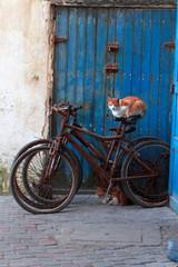Rot getigerte Katze sitzt auf Fahhrad.