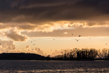 Birds flying over Trasimeno lake with warm sunset colors