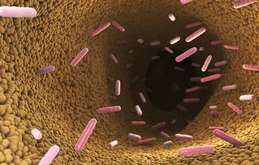 Bacteria in the intestine of digestive system