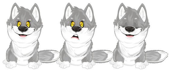 wolf, wolf cub, animal, predator, jackal, dog, zoo, small, gray, puppy, three, different