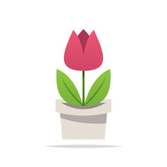 Tulip flower in pot vector isolated