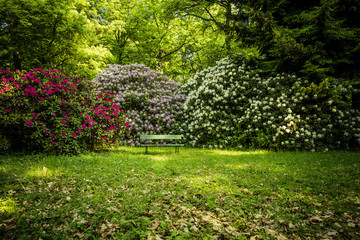 beautiful flowers in the rhododendron park