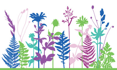 Vector silhouette of meadow wild grass and plants. Isolated horizontal floral frame on white background. Nature lawn composition. Colour set. Design for decoration, poster, card, invitation.