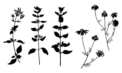 Collection of vector black silhouettes of herbal plants. Isolated on white background. Design objects for decor, textile, poster, card, invitation, announcements, advertisement. Daisy, mint, oregano.