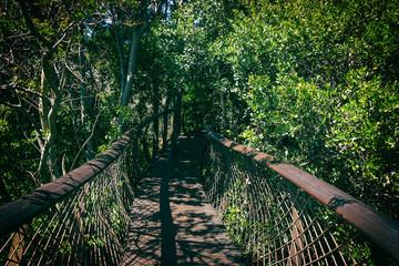 Elevated walkway bridge in Kirstenbosch botanical garden, Cape Town